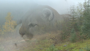 Image d'une tête de cougar en fondu avec une image de forêt.