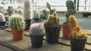 Quelques plantes succulentes en pots.