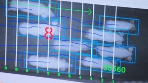 Écran d'ordinateur avec l'image de la caméra de surveillance qui compte les porcs à leur sortie.