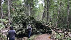 Deux personnes de dos marchent sur un sentier en forêt où un arbre est tombé