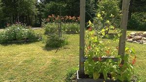 Le jardin communautaire du Ruisseau Bois-Joli près de Sept-Îles