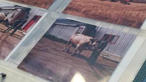 Des photos dans un album.