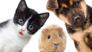 Les animaux de compagnie se font prescrire les mêmes opioïdes que les êtres humains pour soulager leurs douleurs.