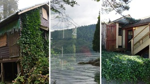 Montage de trois photos représentant des maisons dévorées par la végétation.