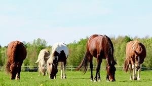 Des chevaux dans un enclos