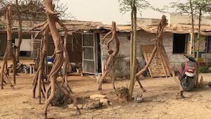 Personnages étranges créés à même des troncs d'arbres de l'artiste sénégalais Sérigne Mor Nguèye