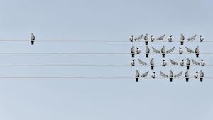 Un oiseau est à l'écart du groupe sur un fil électrique.