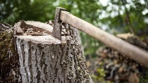 Une hache fend du bois