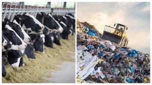 Montage photo avec une ferme de production laitière et un dépotoir.