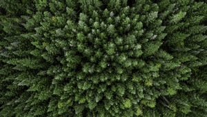 Une photo aérienne prise d'une forêt de conifères.