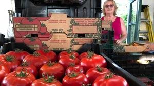 Une caisse de tomates dans un marché public