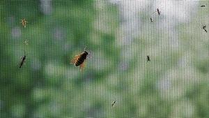 Des insectes sur un moustiquaire.