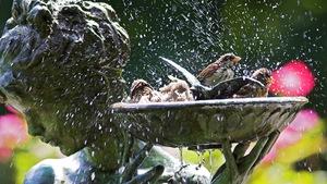 Des oiseaux se mouillent dans le vase d'une statue de bronze.