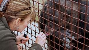 Gloria Grow, fondatrice de la Fondation Fauna, dorlote la guenon Maya, en août 2014.