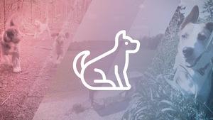 Un pictogramme de chien sur un arrière-plan de photos.