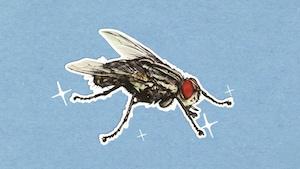 Pourquoi les mouches se frottent-elles les pattes?