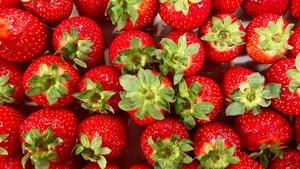 De belles fraises bien rouges avec leur queue