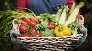 Le panier contient des tomates, du brocoli, un poivron du maïs et des carottes