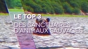 Le top 3 des sanctuaires d'animaux sauvages.