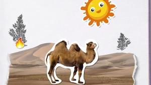 Pourquoi les chameaux ont-ils deux bosses?