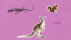 Pourquoi certains animaux ont-ils une queue?
