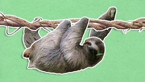 Pourquoi le paresseux se déplace-t-il toujours lentement?