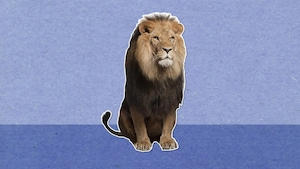 Pourquoi dit-on que le lion est le roi des animaux?