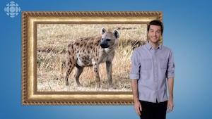 Hyènes, Christophe Colomb et Musique
