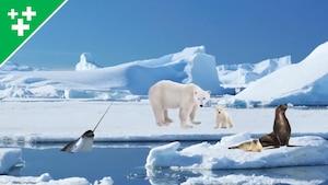 Faits fascinants sur le Pôle Nord