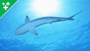 Faits fascinants sur les requins