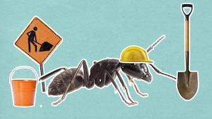 Les fourmis dorment-elles?