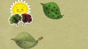 Pourquoi les feuilles des arbres changent-elles de couleur à l'automne?