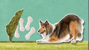 Comment expliquer les petites manies des chiens?