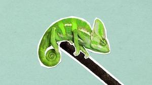 Comment les caméléons changent-ils de couleur?