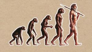 L'homme descend-il vraiment du singe?