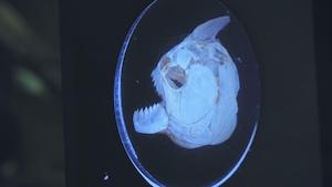 Piranhas, chauve-souris et poissons exotiques