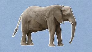 Pourquoi l'éléphant est-il un animal si étonnant?