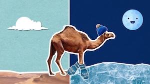 Pourquoi fait-il chaud le jour et froid la nuit dans le désert?