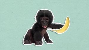 Pourquoi la banane est-elle recourbée?