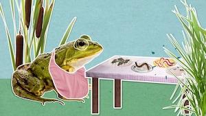 Comment les grenouilles se nourrissent-elles?