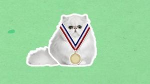 Est-ce le poil du chat qui rend certaines personnes allergiques à cet animal?