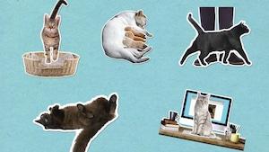 Comment expliquer les petites manies des chats?