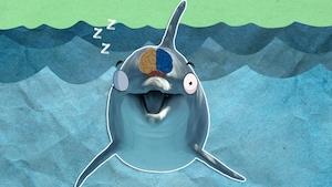 Pourquoi arrive-t-il que les dauphins n'aient qu'un seul œil ouvert?