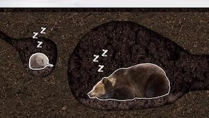 Les ours dorment-ils tout l'hiver?
