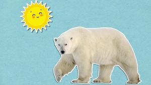 De quelle couleur est l'ours polaire?