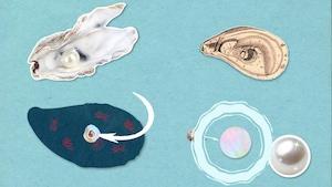D'où viennent les perles?