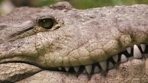Chanson Utiles reptiles