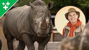 Arthur au Zoo : Le rhinocéros blanc