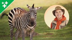 Arthur au Zoo : Le zèbre de Grant