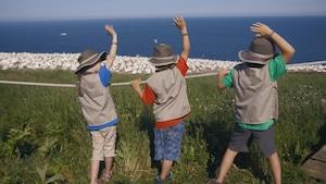 À la découverte d'une île peuplée d'oiseaux